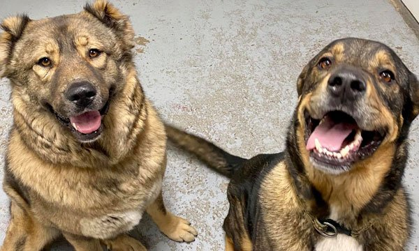 dog kennels for large breed dogs family pets together at redwing kennels in sussex wisconsin