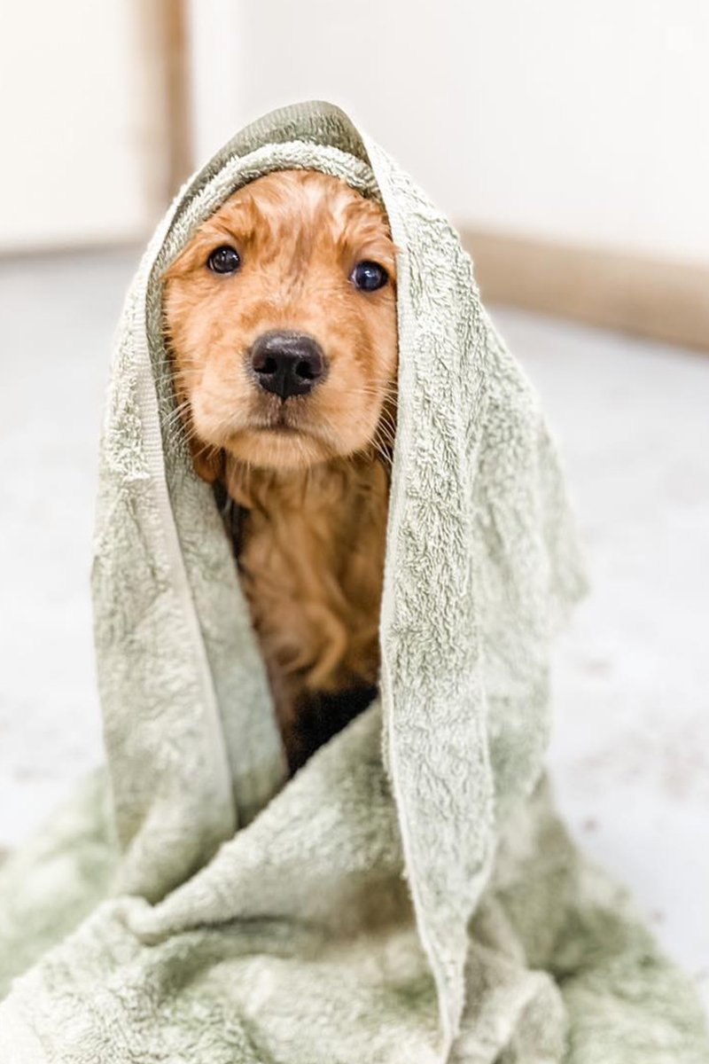 redwing kennels sussex photos dog in towel after bath at boarding