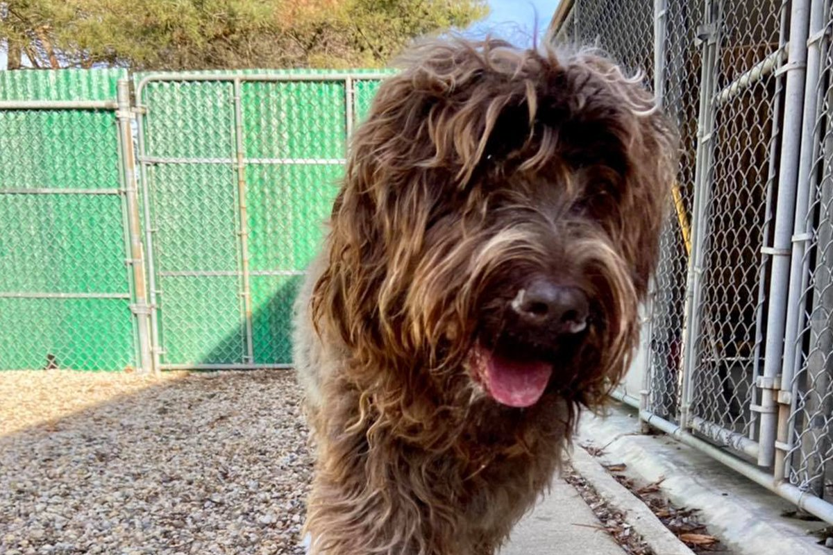 redwing kennels sussex photos owner large long hair dog boarding kennels